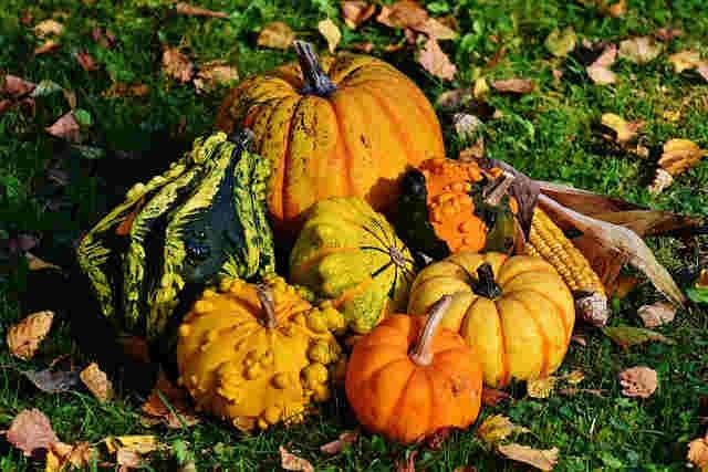Fun Thanksgiving Decor